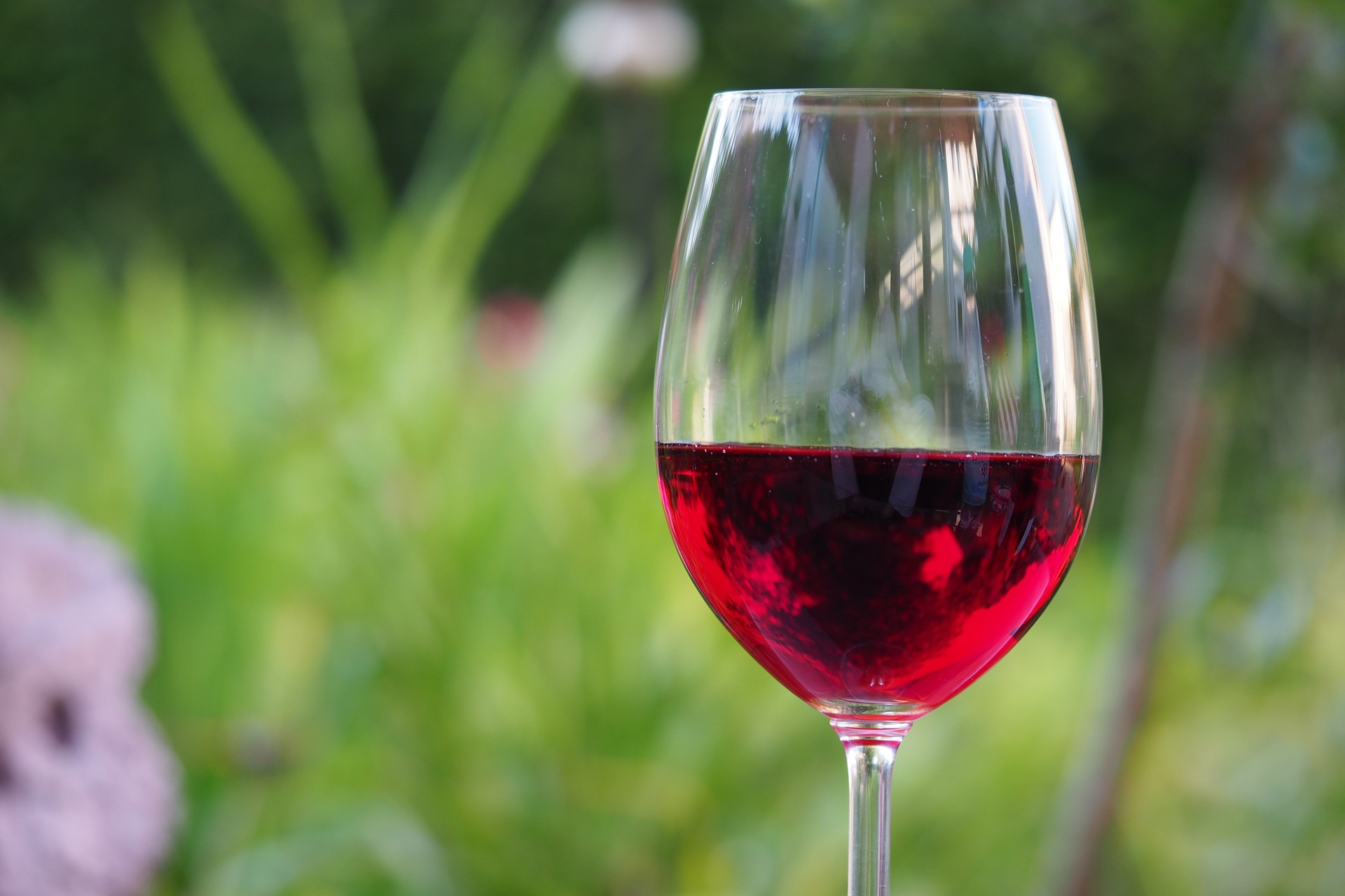 glass of red wine with green grassy background